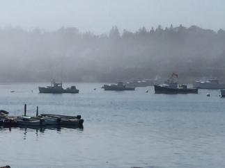 Maine - Bass Harbor Fog