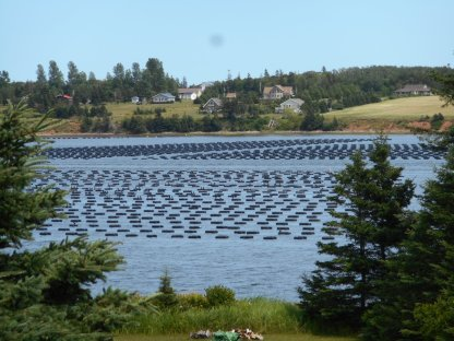 PEI - Oyster Beds (3)
