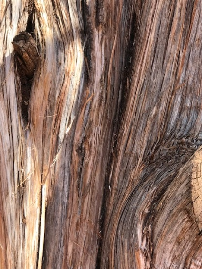 Juniper Bark CloseUp